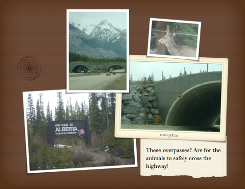 HIGH RISK TOUR-Banff-4
